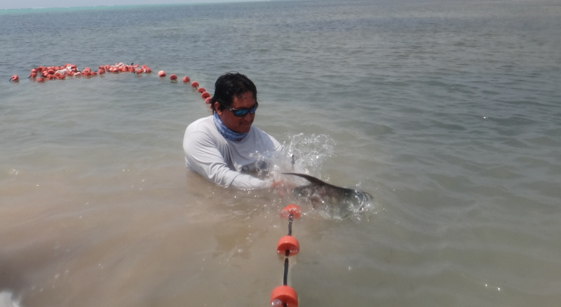 Releasing a tagged permit