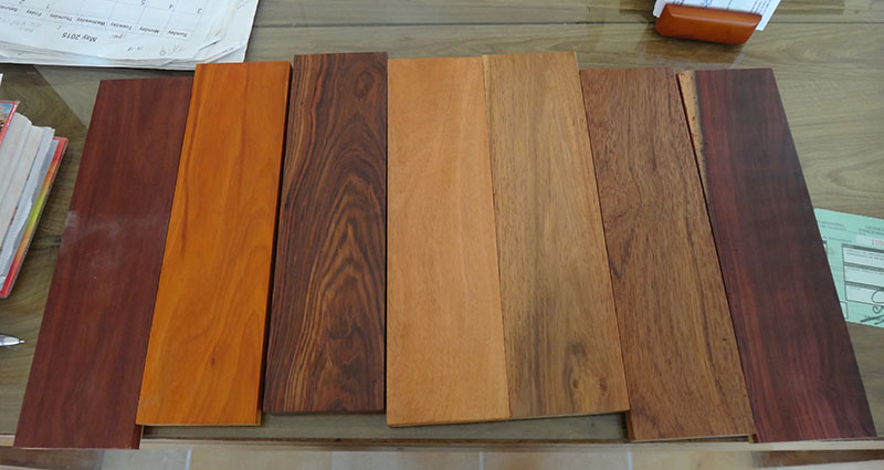 Hardwoods of the Yucatan